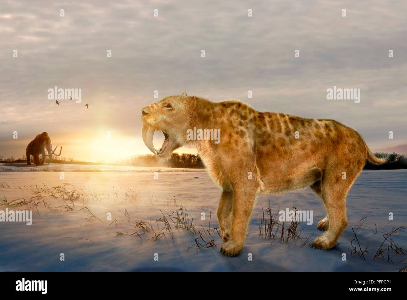 A prehistoric scene with a smilodon (early sabre-toothed cat) in the foreground and a mammoth in the distance - Stock Image