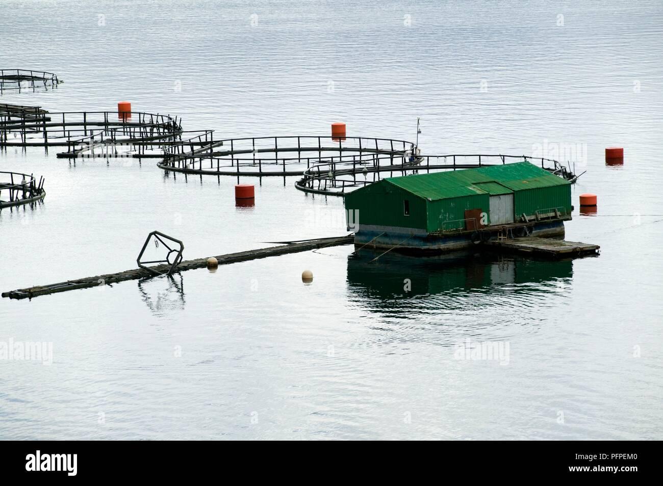 Chile, Patagonia, near Puerto Puyuhuapi town, fish farm in Bahia Dorita (Dorita Bay) - Stock Image