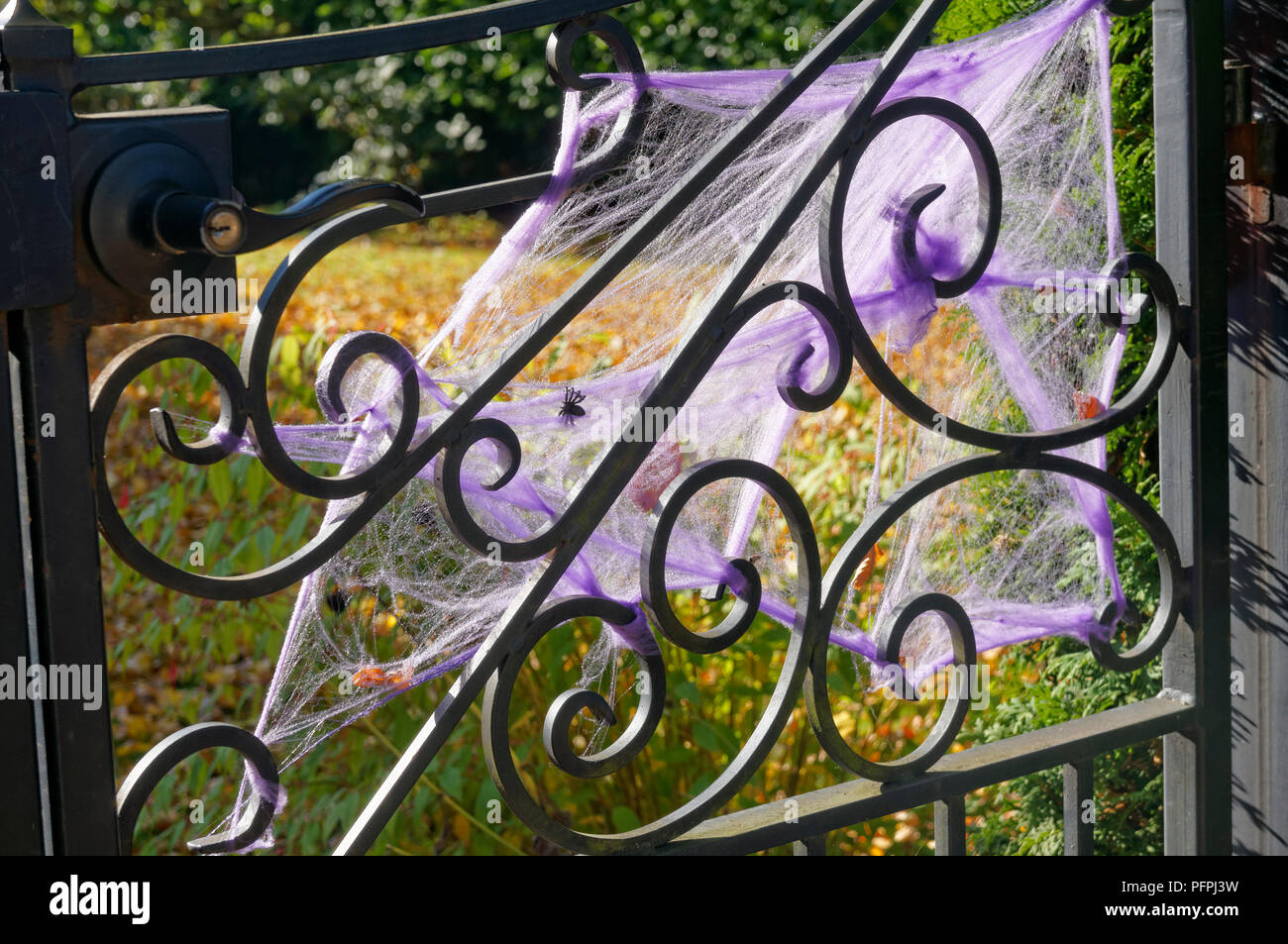 Purple Halloween spider webs decorating the metal gate of a house - Stock Image
