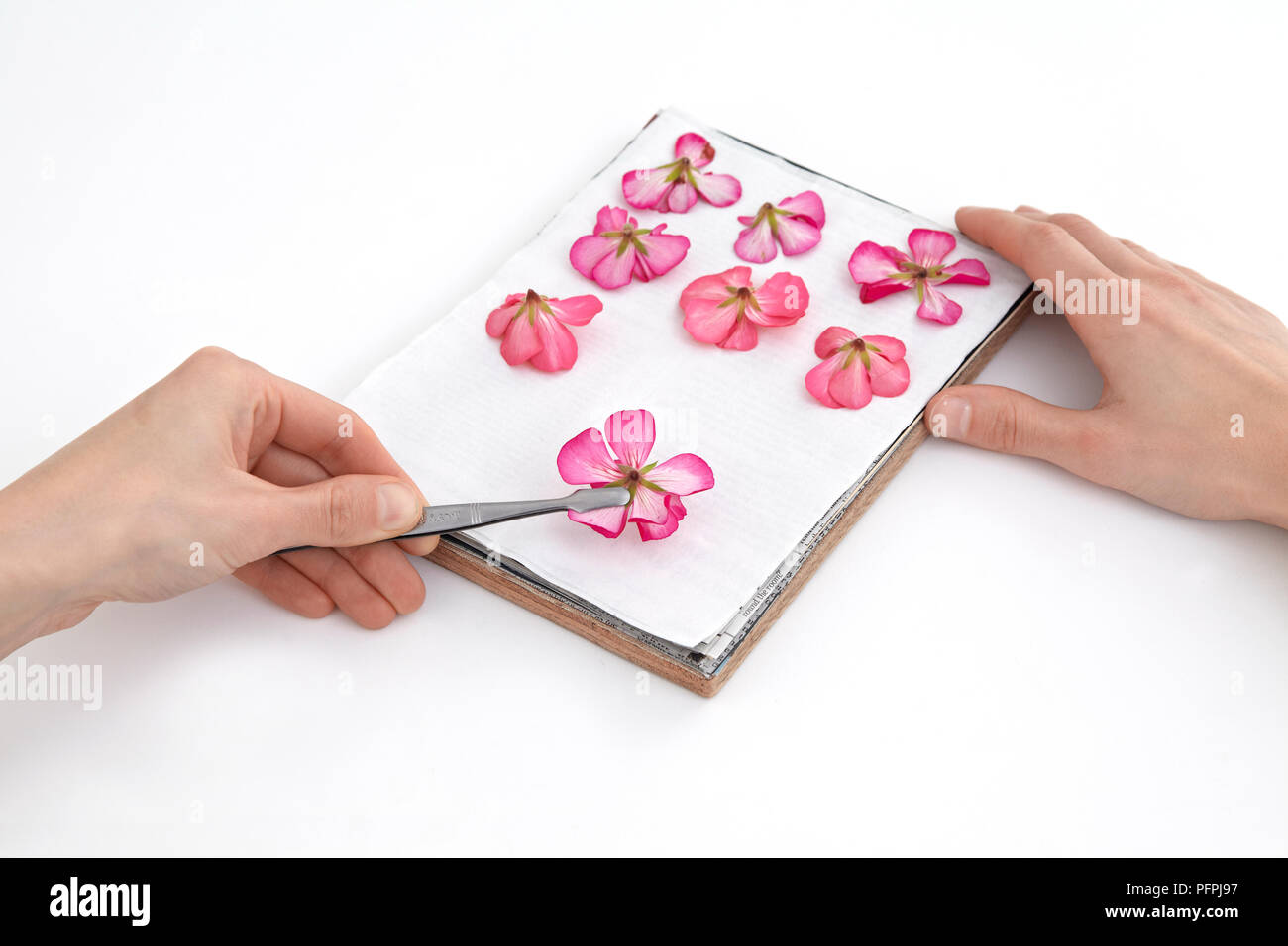 Flower press stock photos flower press stock images alamy using tweezers to place flowers on layer of absorbent paper on flower press close mightylinksfo