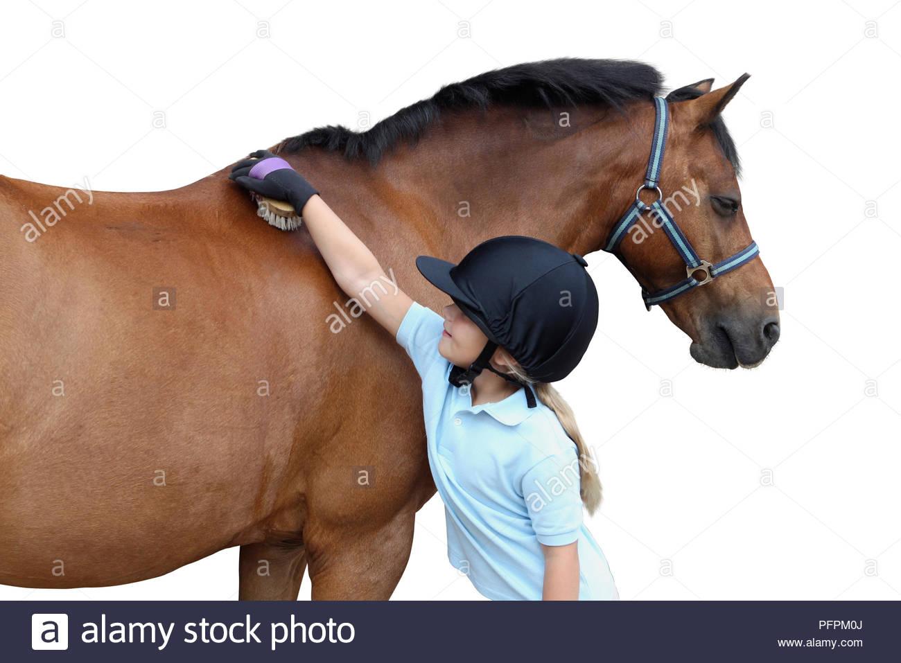 Girl brushing horse's coat - Stock Image