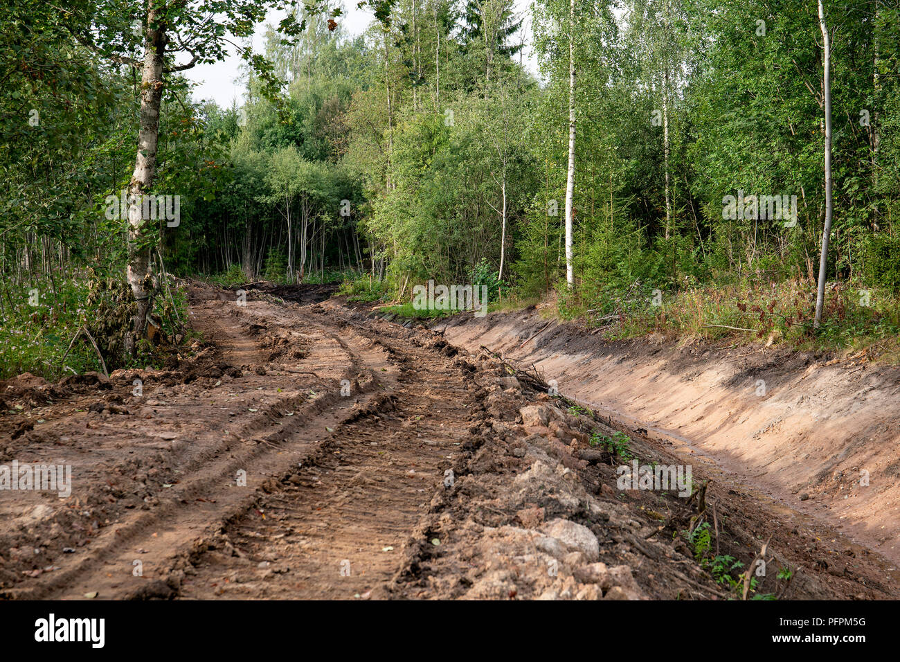 system of drainage ditch in the woods for water colleting Stock Photo