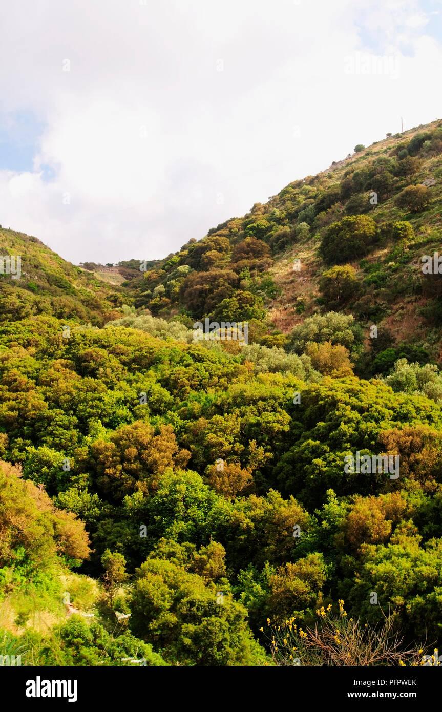Greece, Greek Islands, Kefallonia, forest covering hills, near Mytrou Bay - Stock Image