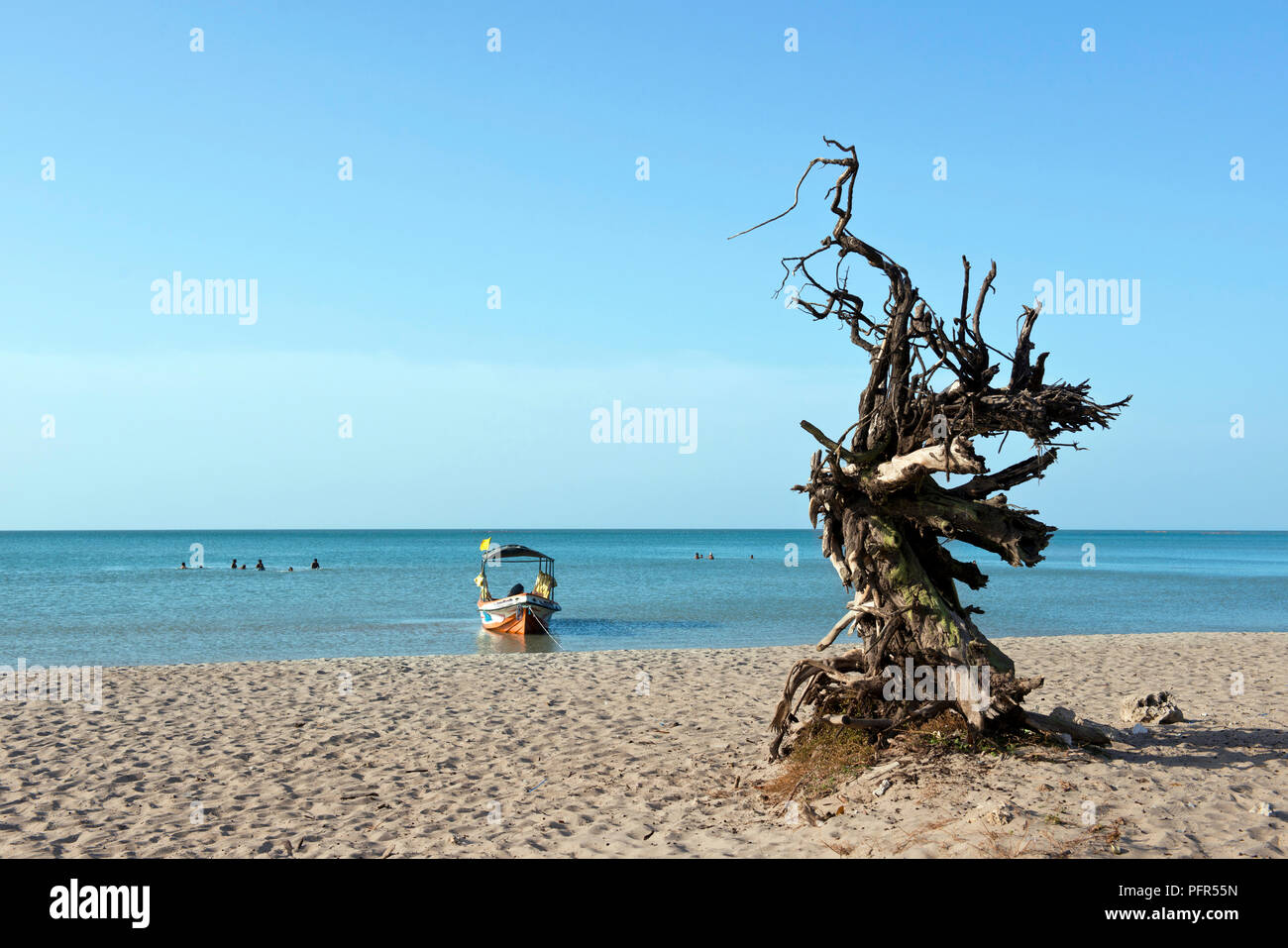 Sri Lanka, North Eastern Province, Jaffna, Casuarina Beach, dead tree on beach and boat in background - Stock Image