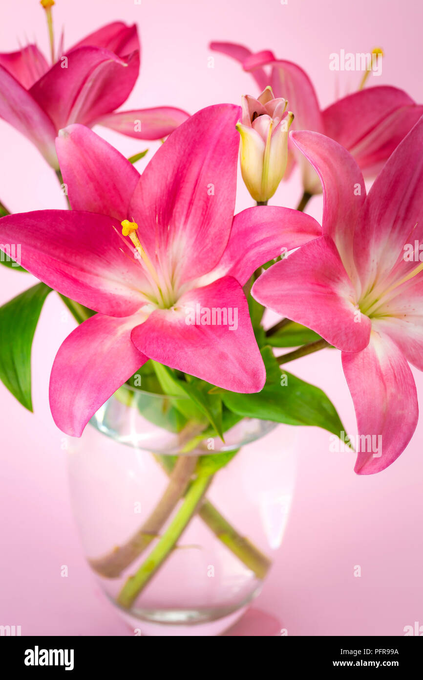 Pink Lily Flowers In A Glass Jar Carnation Flowers Stock Photo