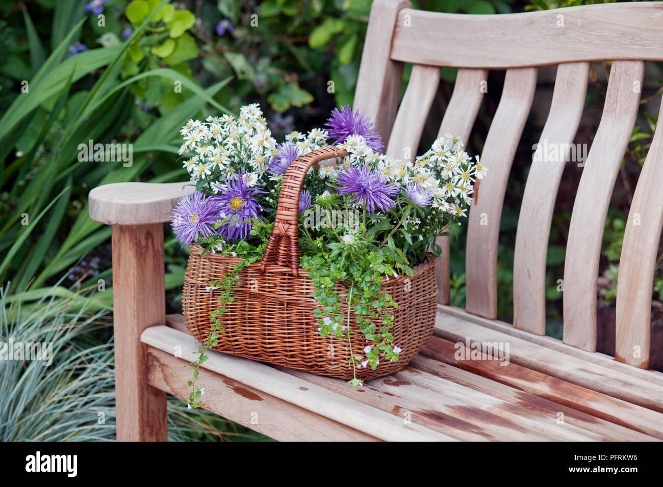 Brilliant Bedding Asters And Bacopa In Wicker Basket On Wooden Garden Ncnpc Chair Design For Home Ncnpcorg