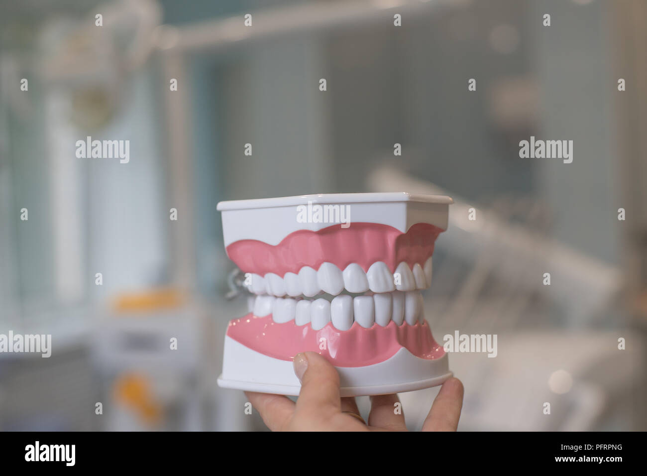 Dental Model of Teeth Isolated with clipping path on dentist clinic background .Studying dentistry and dentist office concept. Regular checkups are essential to oral health. Protecting Healthy Hygienic White Tooth - Stock Image