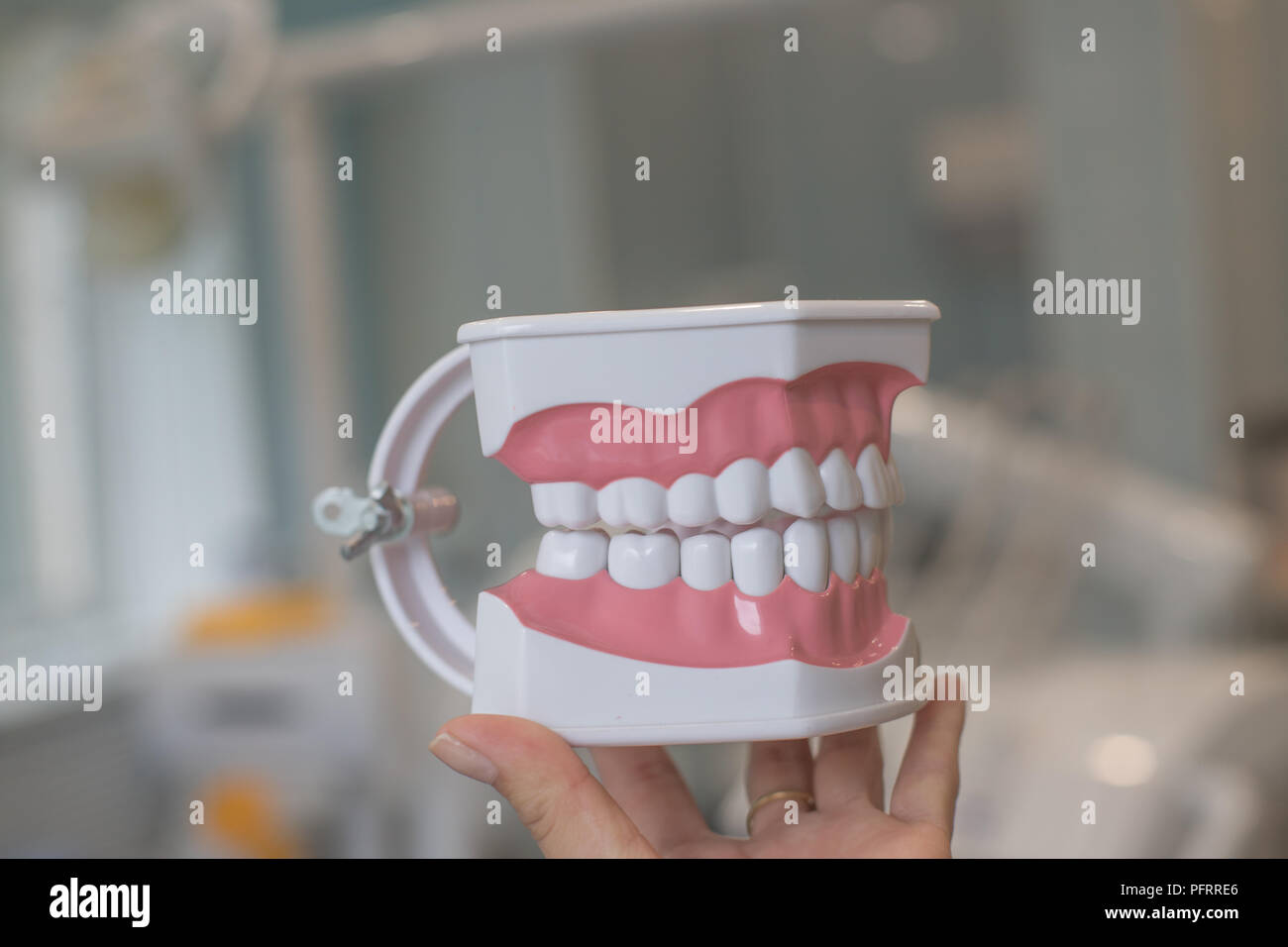 Perfectly straight teeth. Jaw model, close up. Braces on the teeth.teeth model dentures, Stomatology appointment.dental hygienist checkup concept with dentist,teeth model dentures. Regular checkups are essential to oral health - Stock Image