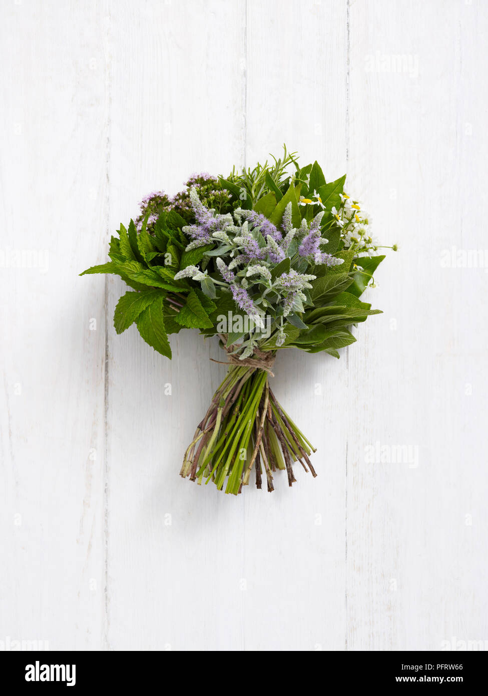 Herb posy (Herb nosegay), mint, flowering mint, sage, rosemary, marjoram, camomile, bay leaves - Stock Image