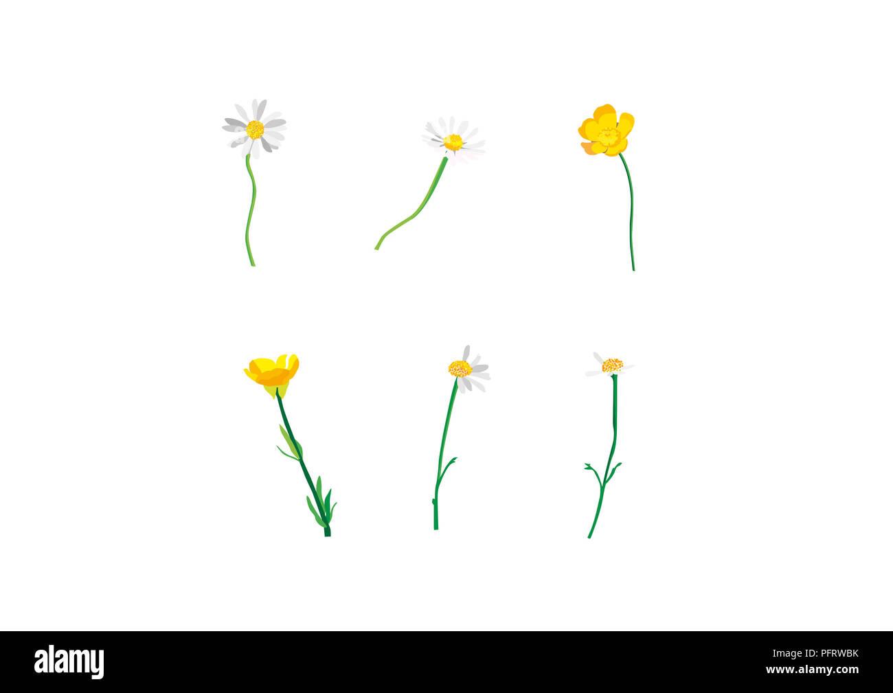 Yellow daisy diagram wiring diagram services yellow daisy cut out stock photos yellow daisy cut out stock rh alamy com flower data diagrams daisy powerline 880 parts diagram izmirmasajfo