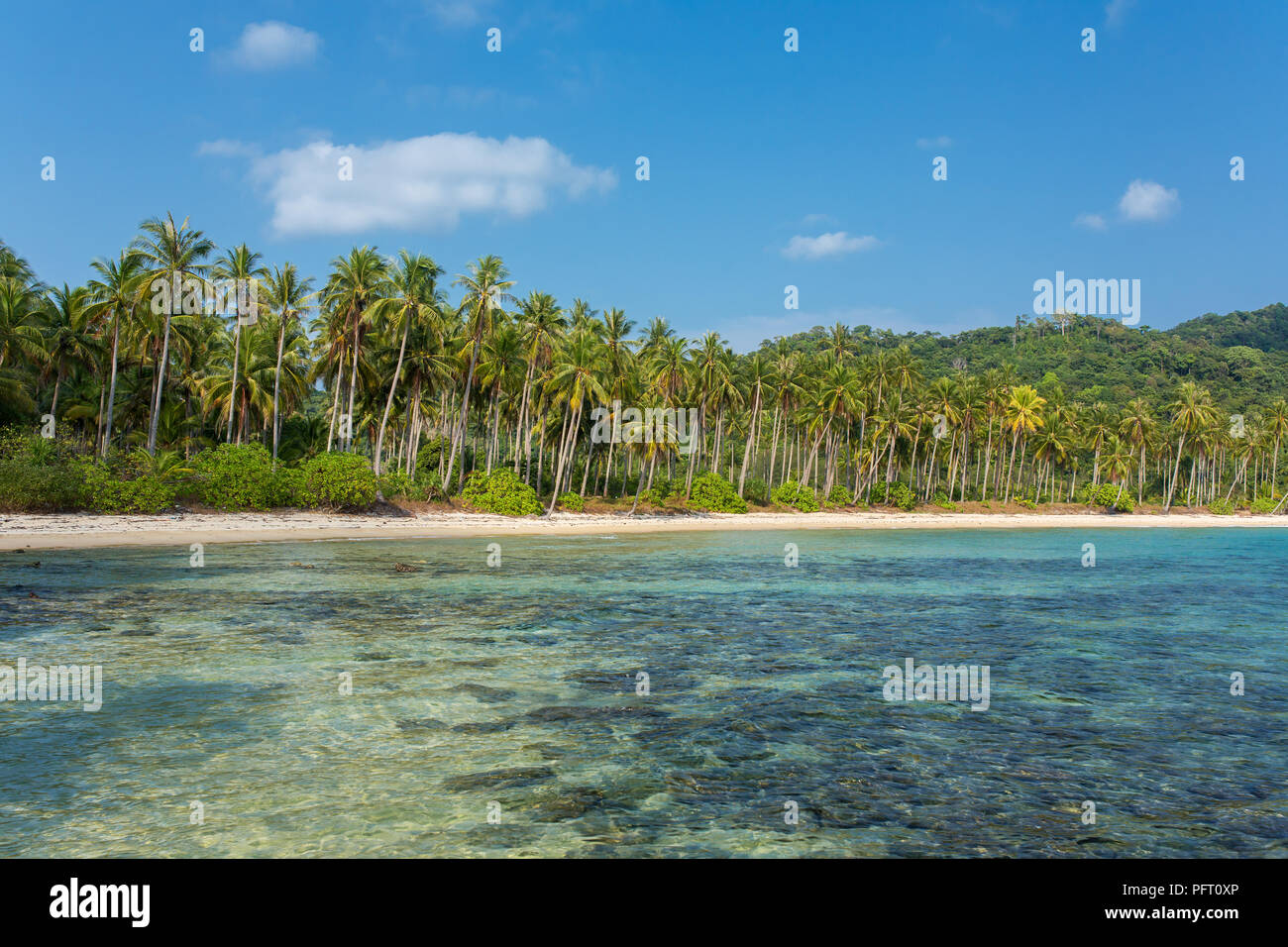 Palm trees on beautiful tropical beach on Koh Chang island in Thailand - Stock Image