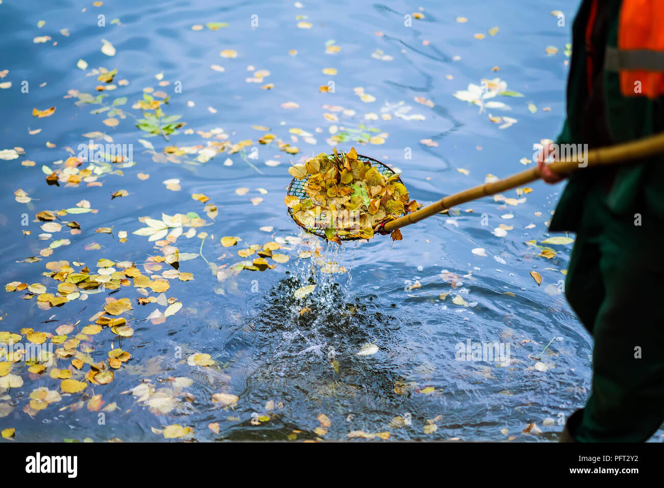 Cleaning swimming pond in the park from fallen leaves with special mesh in autumn, work in the city outdoors, , real scene - Stock Image