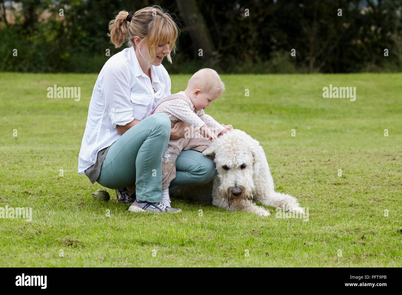 Labradoodle: with family Stock Photo