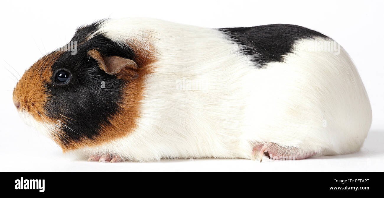 Domestic Animals Cut Out Stock Images & Pictures - Alamy