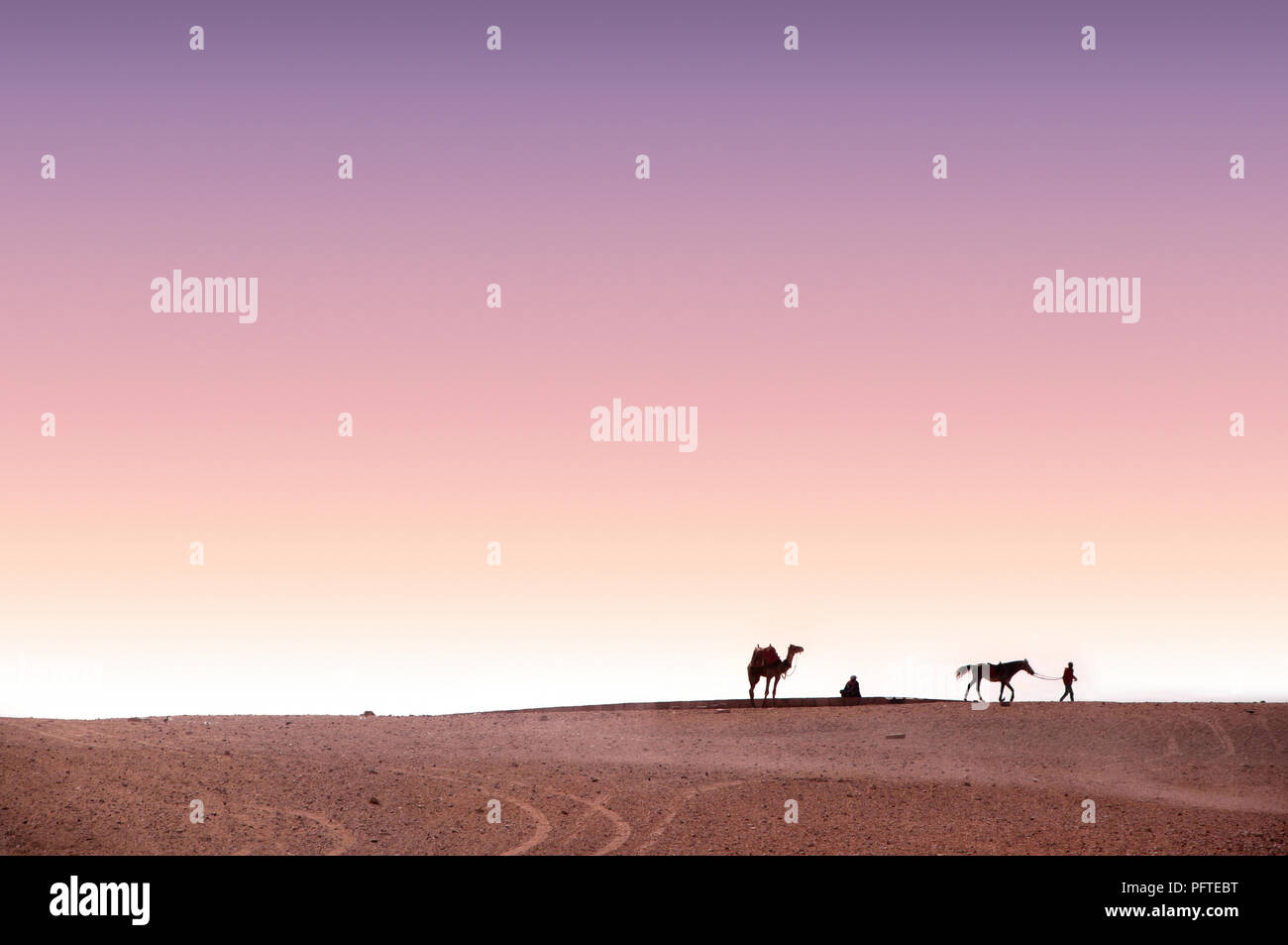 Colorful minimalist landscape of the Sahara desert with silhouettes of camel, horse and man over pink and purple sunset sky, Egypt, Africa - Stock Image