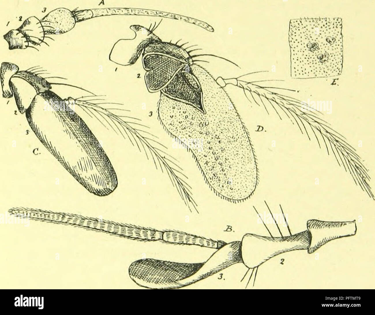 The anatomy, physiology, morphology and development of the blow-fly ...