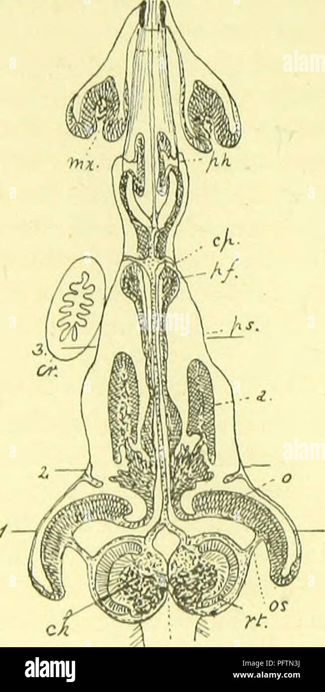 The Anatomy Physiology Morphology And Development Of The Blow Fly