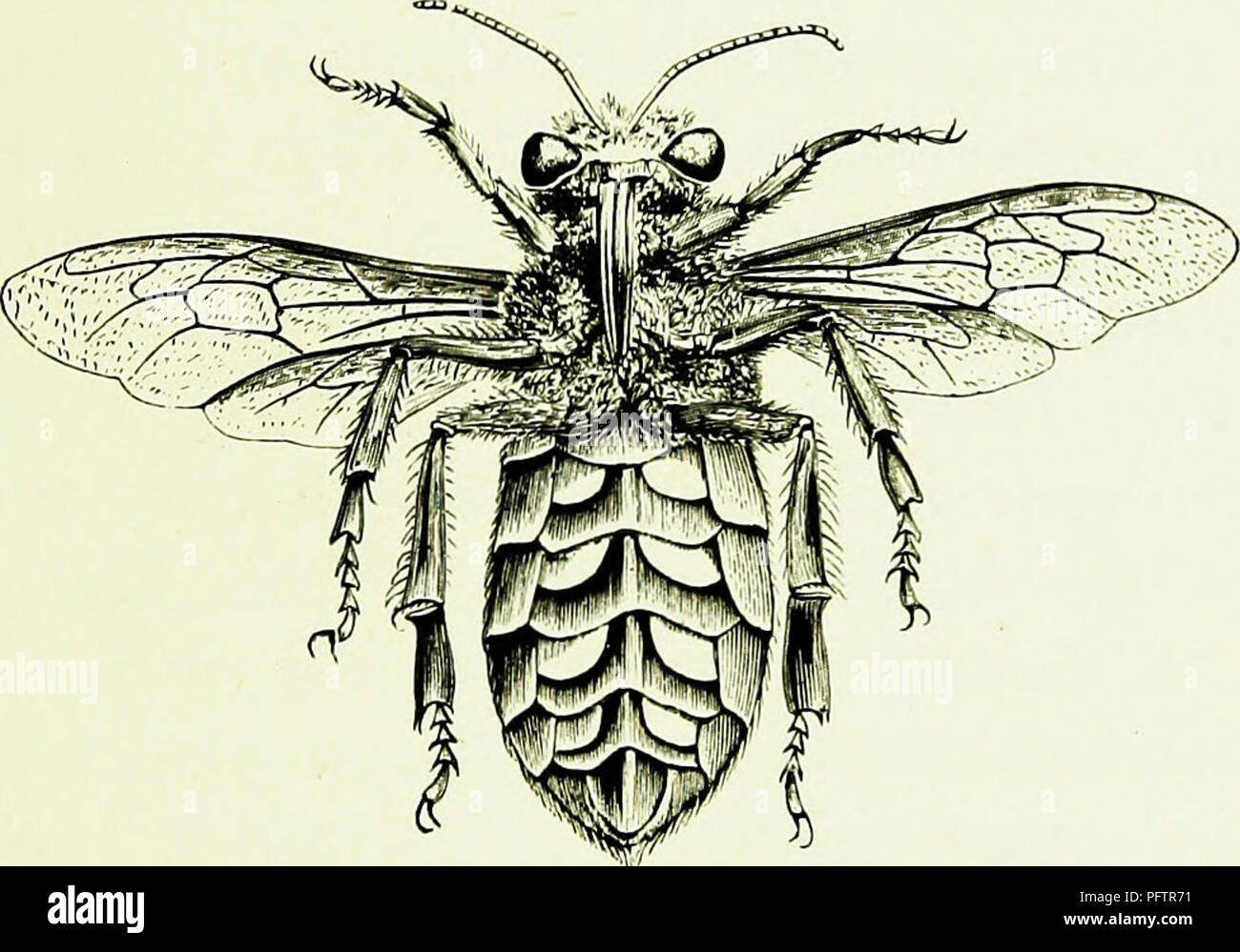 Bees Bee Keeping Scientific And Practical A Complete Treatise On