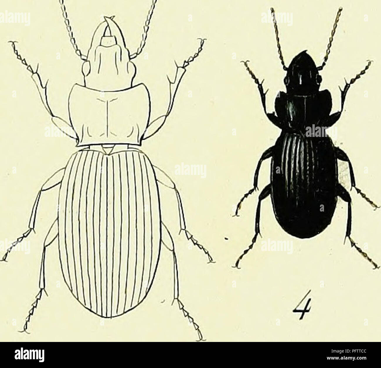 3 Hi Vis mousse coléoptères