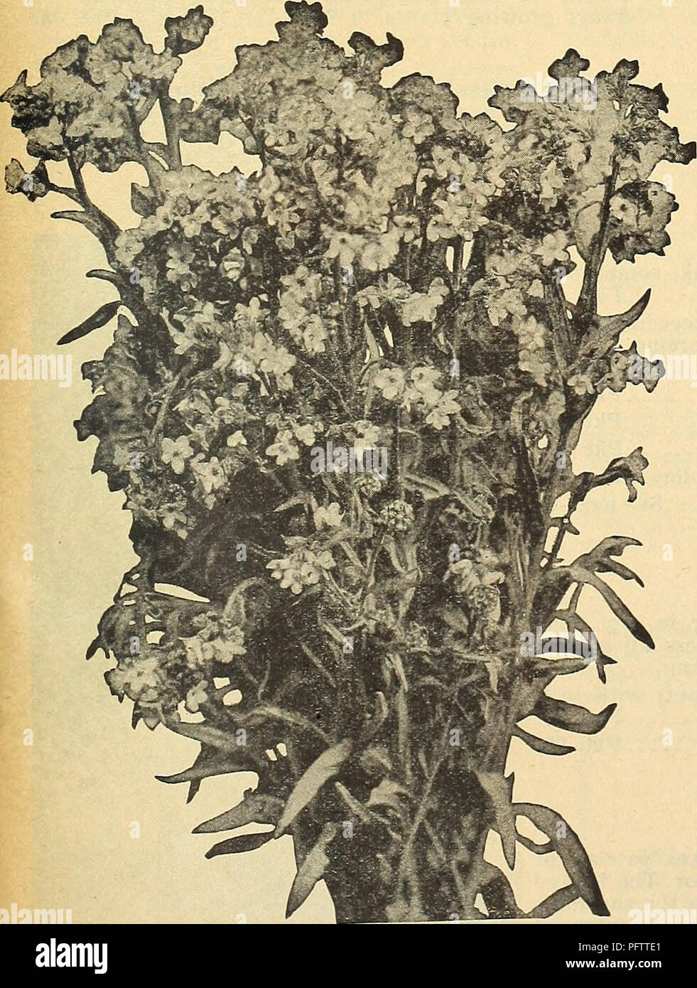 Currie\'s garden annual : 63rd year spring 1938. Flowers Seeds ...