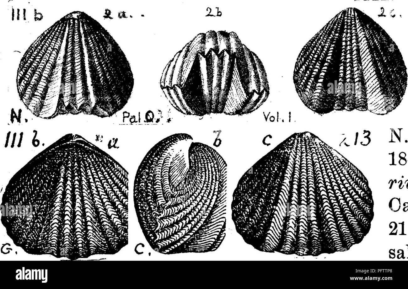 . A dictionary of the fossils of Pennsylvania and neighboring states named in the reports and catalogues of the survey ... Paleontology. 885 Rhyn. Bihynchonella. osipax (Atrypa capax; Conrad. Jour. Ac.. If.. Please note that these images are extracted from scanned page images that may have been digitally enhanced for readability - coloration and appearance of these illustrations may not perfectly resemble the original work.. Lesley, J. P. (J. Peter), 1819-1903; Pennsylvania. Board of Commissioners for the Second Geological Survey. Harrisburg, Board of Commissioners for the Geological Survey - Stock Image