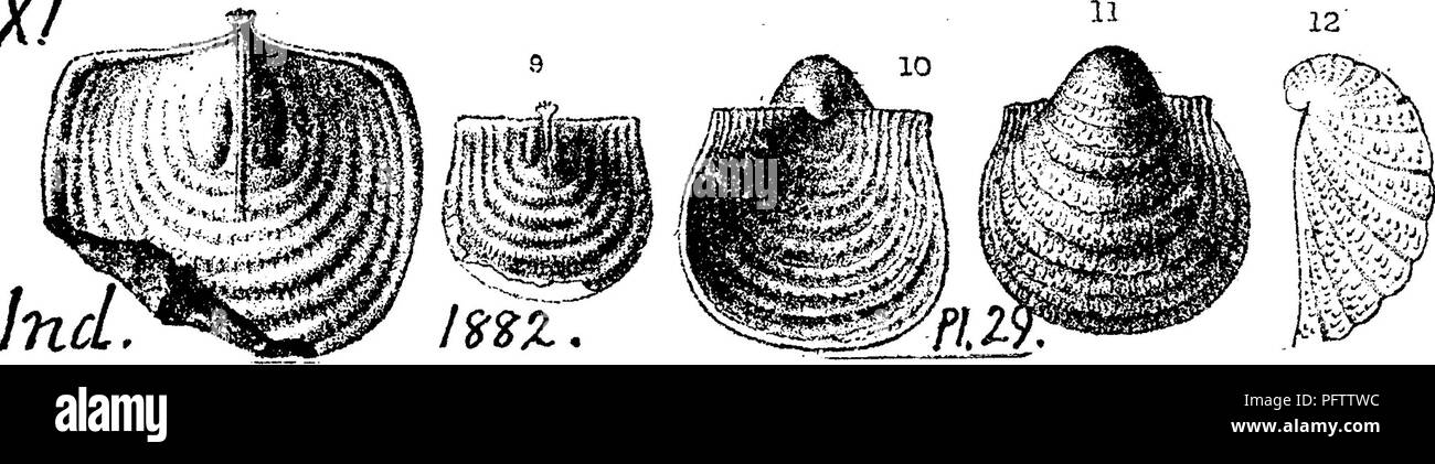 . A dictionary of the fossils of Pennsylvania and neighboring states named in the reports and catalogues of the survey ... Paleontology. Prod. 756 Productella ? in I. 0. White's Stony Brook leds (pas- sage of Chemung into CatsMll) at Rupert, bed 9 (G7, p. 68, 72, 216, 227); at'Catawissa, bed 98 (p. 240), bed 37 (p. 197); in Mifflin township, Columbia Co. (p. 277); in Shamokin town- ship, Northumberland Co. (p. 365); in Jackson township (p* 365). VIlI-IX. Productella ? Among StreptorhyncMis ohemungensis^ Sjnrifera disjuncia^ etc, sparingly distributed through the 1850' or less interval between  Stock Photo