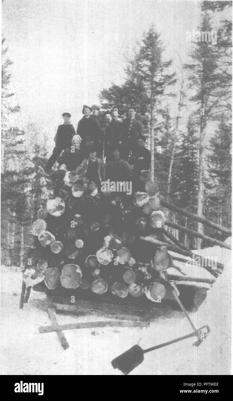 . Forest protection and conservation in Maine, 1919. Forests and forestry. â¢â w- ,. SPRUCE BUDWORM AND WHITE PINE WEEVIL 155 ally attack other species of pine such as the jack pine i Pinus banksiana Lamb) and true pitch pine (Pinus ex- c els a Link.) Plantations o f Norway spruce, especially, are often subject to great damageâ second only to white pine in this respect. Young trees from 4 to 20 feet in height, are most subject to attack, al- though less com- monly pines well over thirty feet high may be in- jured by the wee- vil. It also shows a decided prefer- ence for trees growing in plan-  - Stock Image