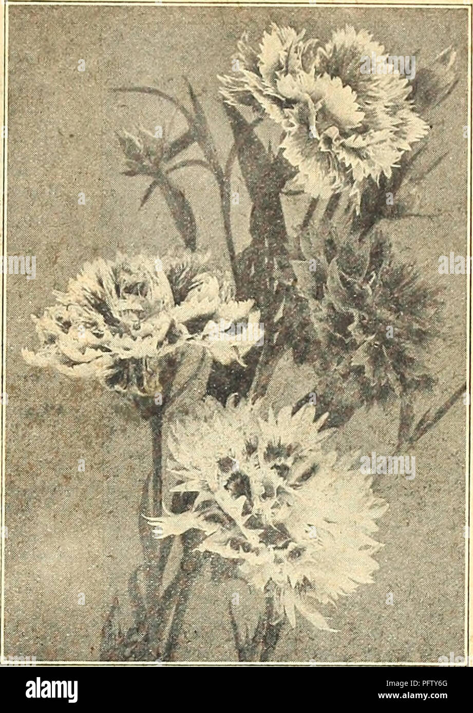 Curries Farm And Garden Annual Spring 1921 46th Year Flowers