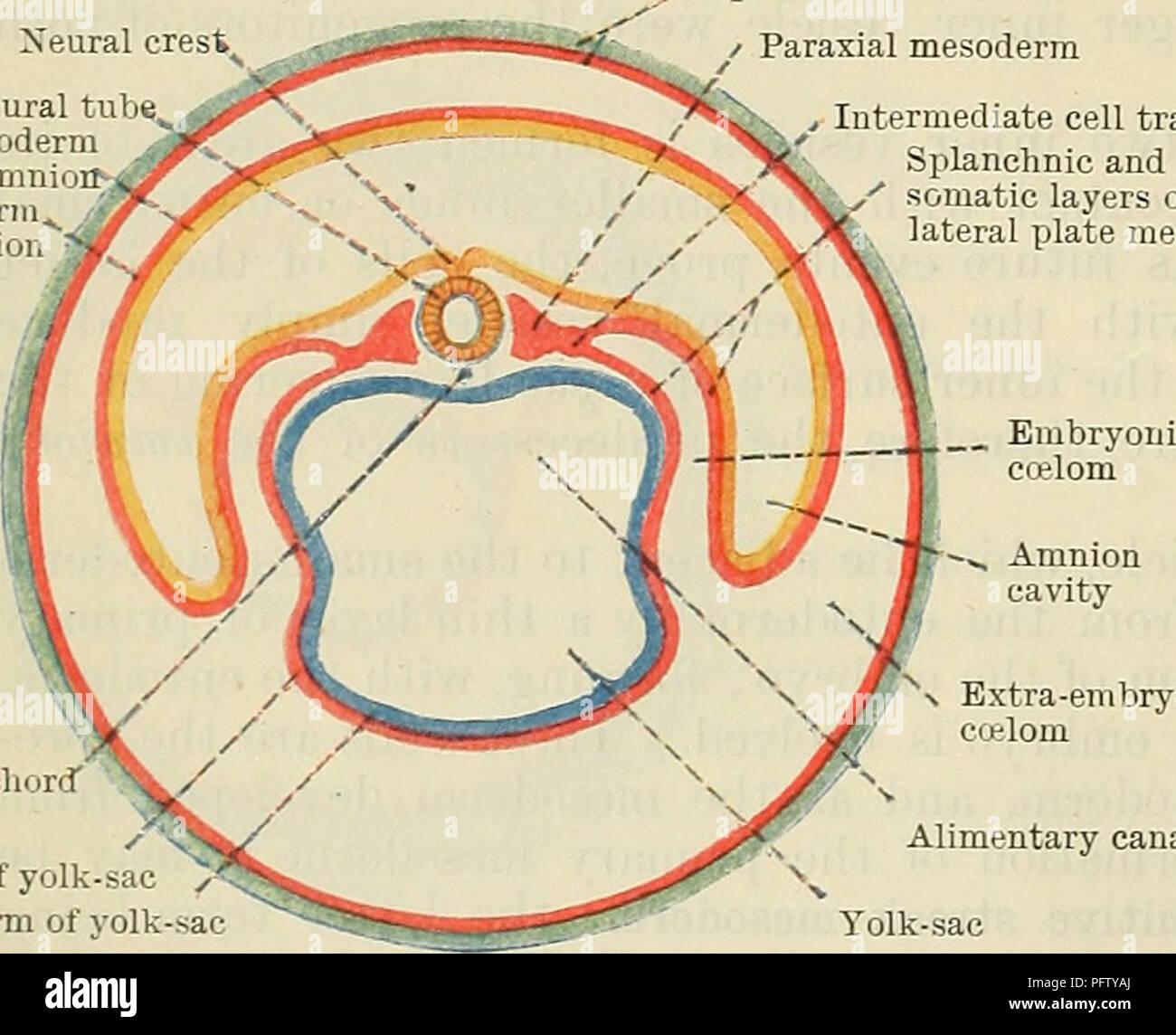 Cunningham\'s Text-book of anatomy. Anatomy. Trophoblast of chorion ...