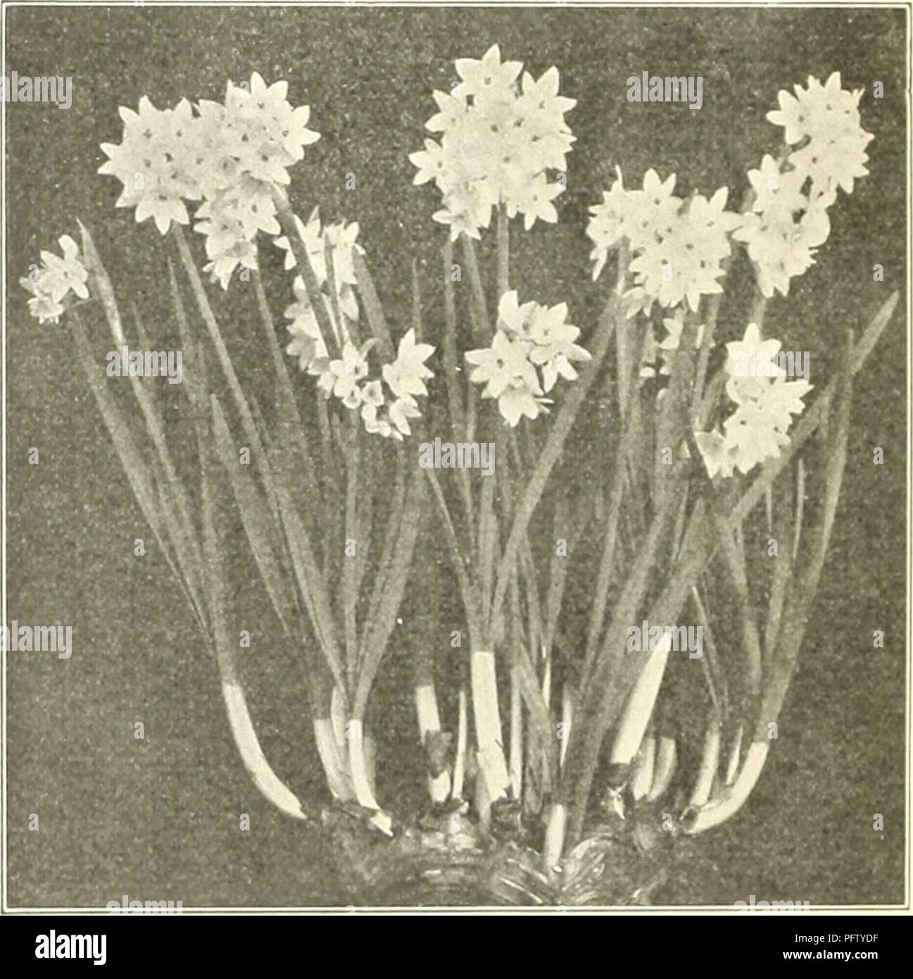 Curries Bulbs And Plants Autumn 1925 Flowers Seeds Catalogs