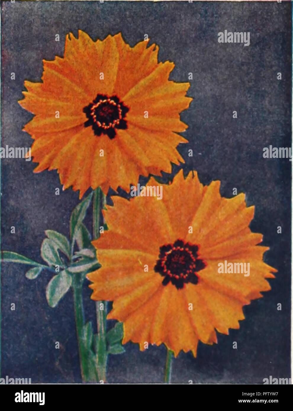 Curries 65th Year Garden Annual Flowers Seeds Catalogs Bulbs