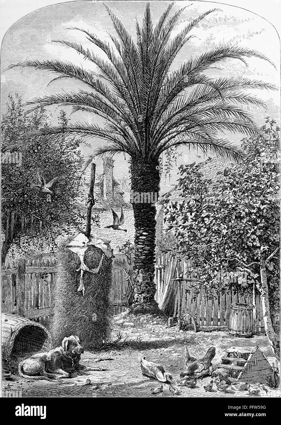 Black and a white vintage print depicting a farmyard, with a dog and chickens in the foreground and a date palm (Phoenix dactylifera) in the background, located in the town of St Augustine, on the northeastern coast of Florida, published in William Cullen Bryant's edited volume 'Picturesque America; or, The Land We Live In', 1872. Courtesy Internet Archive. () Stock Photo