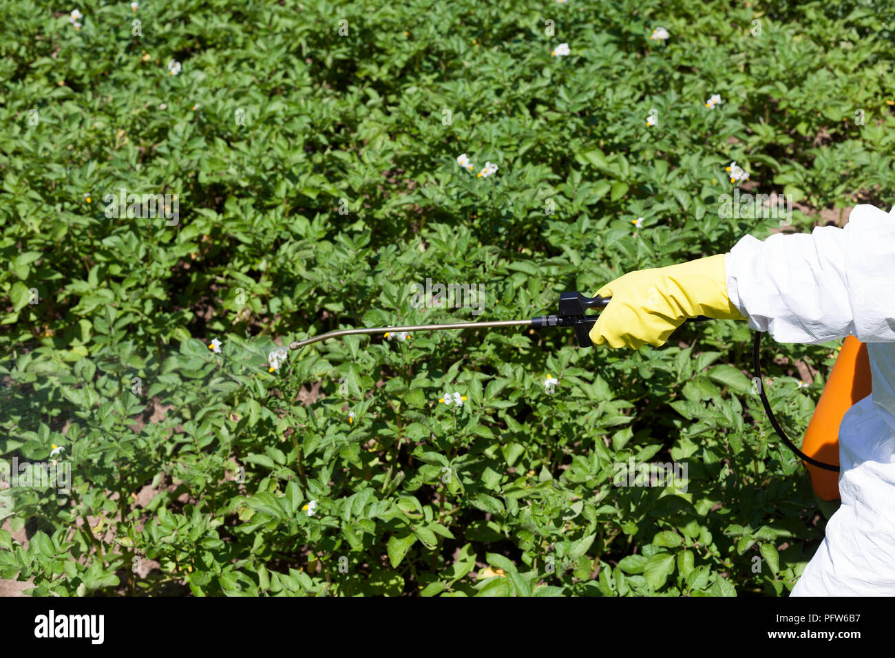 Farmer spraying vegetables with pesticides - Stock Image