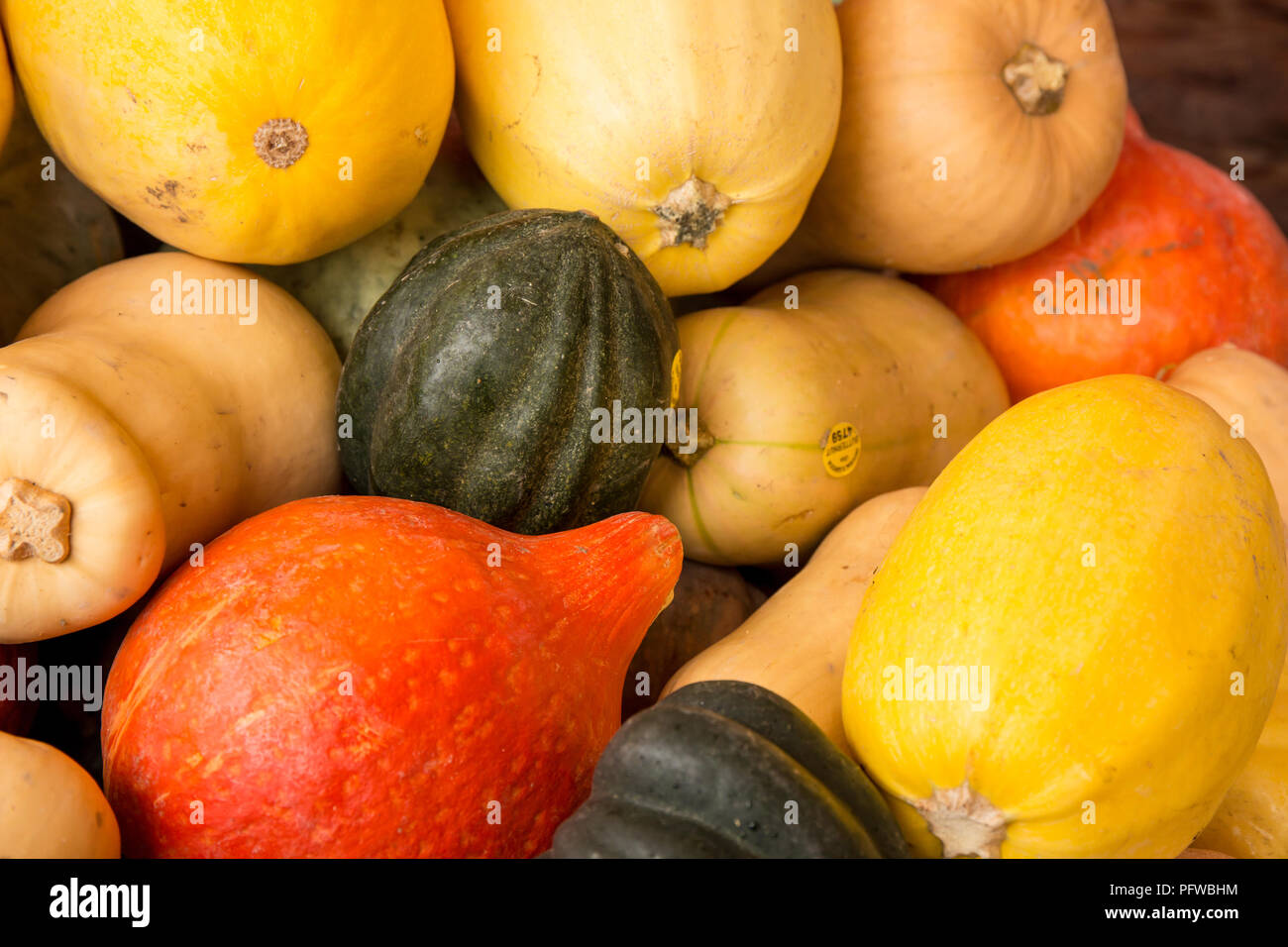 Hood River, Oregon, USA.  Variety of winter squash, including Acorn, Butternut, Kuri and Spagetti or Vegetable Squash. Stock Photo