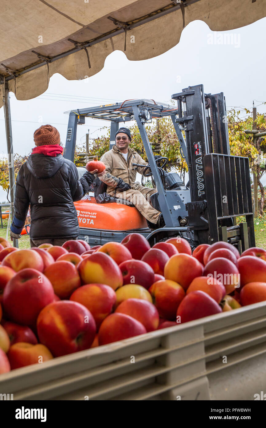 Hood River, Oregon, USA.  Woman asking a question of a forklift driver on a rainy day at a fruit stand.  (For editorial use only) - Stock Image