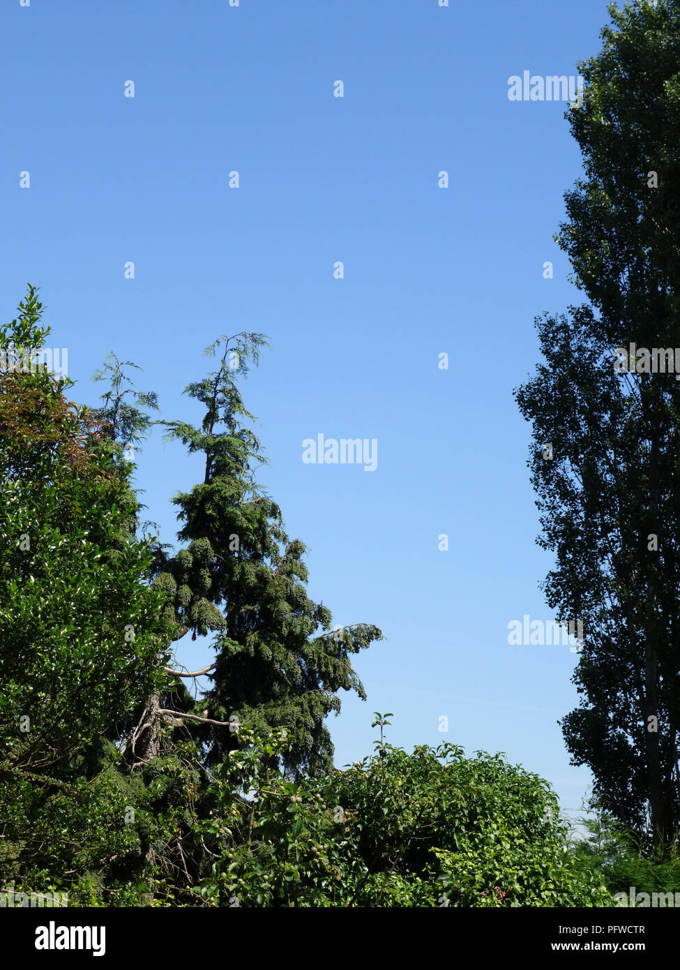 Sky scene on a summers day in the South of France. Perfect blue sky showing through gaps in trees. - Stock Image