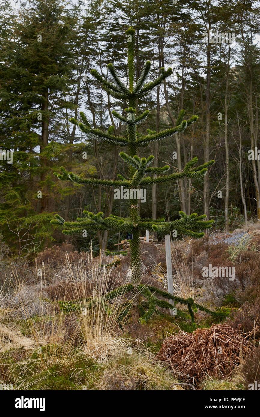 Pine Gardens Stock Photos & Pine Gardens Stock Images - Alamy