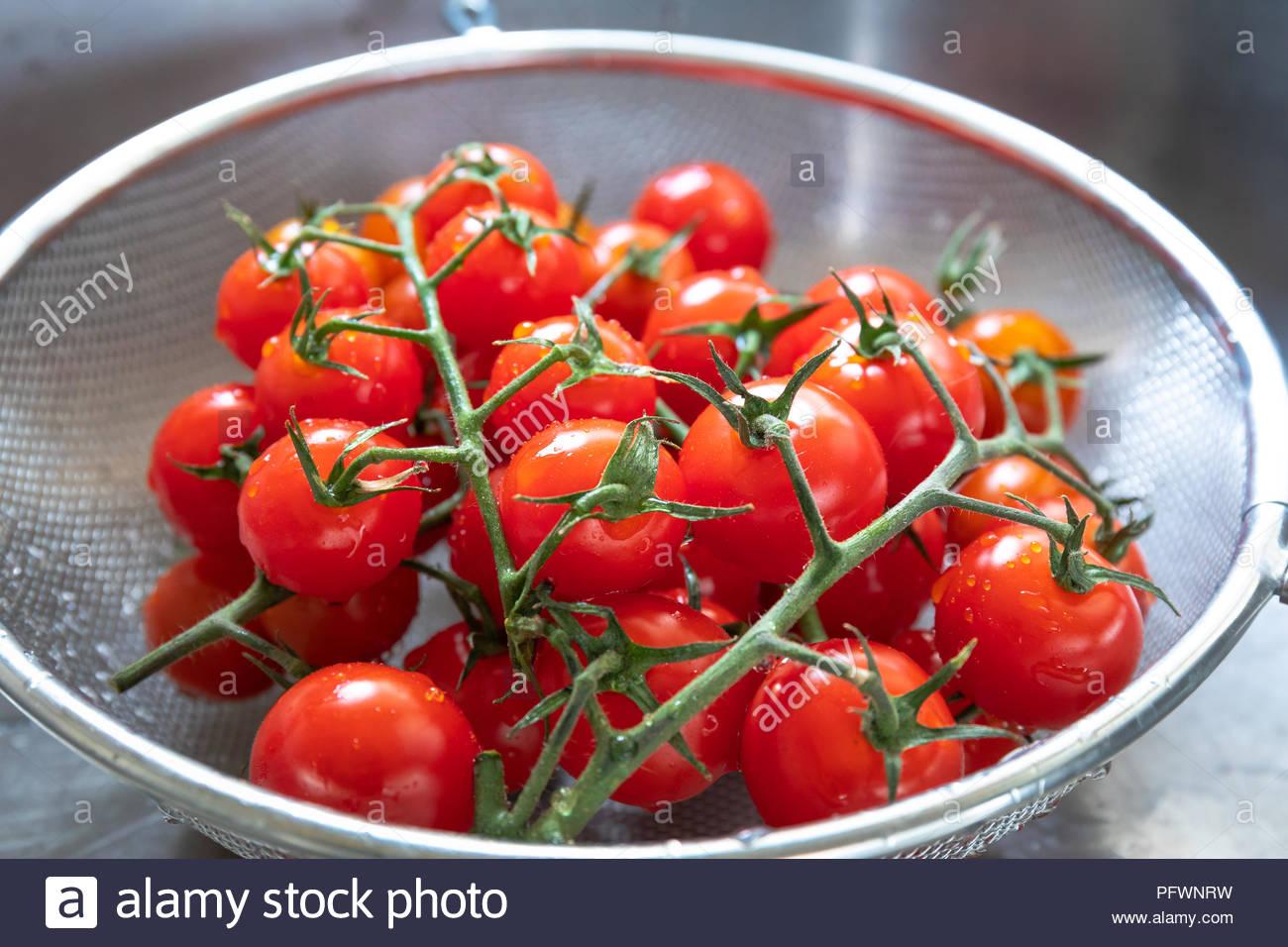 Freshly Washed Tomatoes On Vine - Stock Image