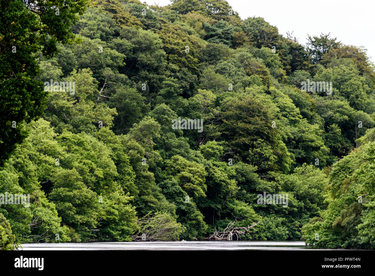 Simon Woods High Resolution Stock Photography And Images Alamy