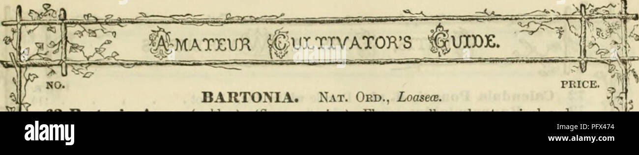 . Curtis, Cobb & Washburn's amateur cultivator's guide to the flower and kitchen garden for 1878. Nursery stock Massachusetts Catalogs; Flowers Seeds Catalogs; Kitchen gardens Catalogs. PRICE. BARTONIA. Nat. Oed., Loasece. 63 Bartonia Anrea (golilen). (See engraviii<i). Flowers yellow, about an inch and a half across, which have quite a metallic lustre wbeu the sun shines upon them; very showy. 2 feet , ,. Please note that these images are extracted from scanned page images that may have been digitally enhanced for readability - coloration and appearance of these illustrations may not p - Stock Image