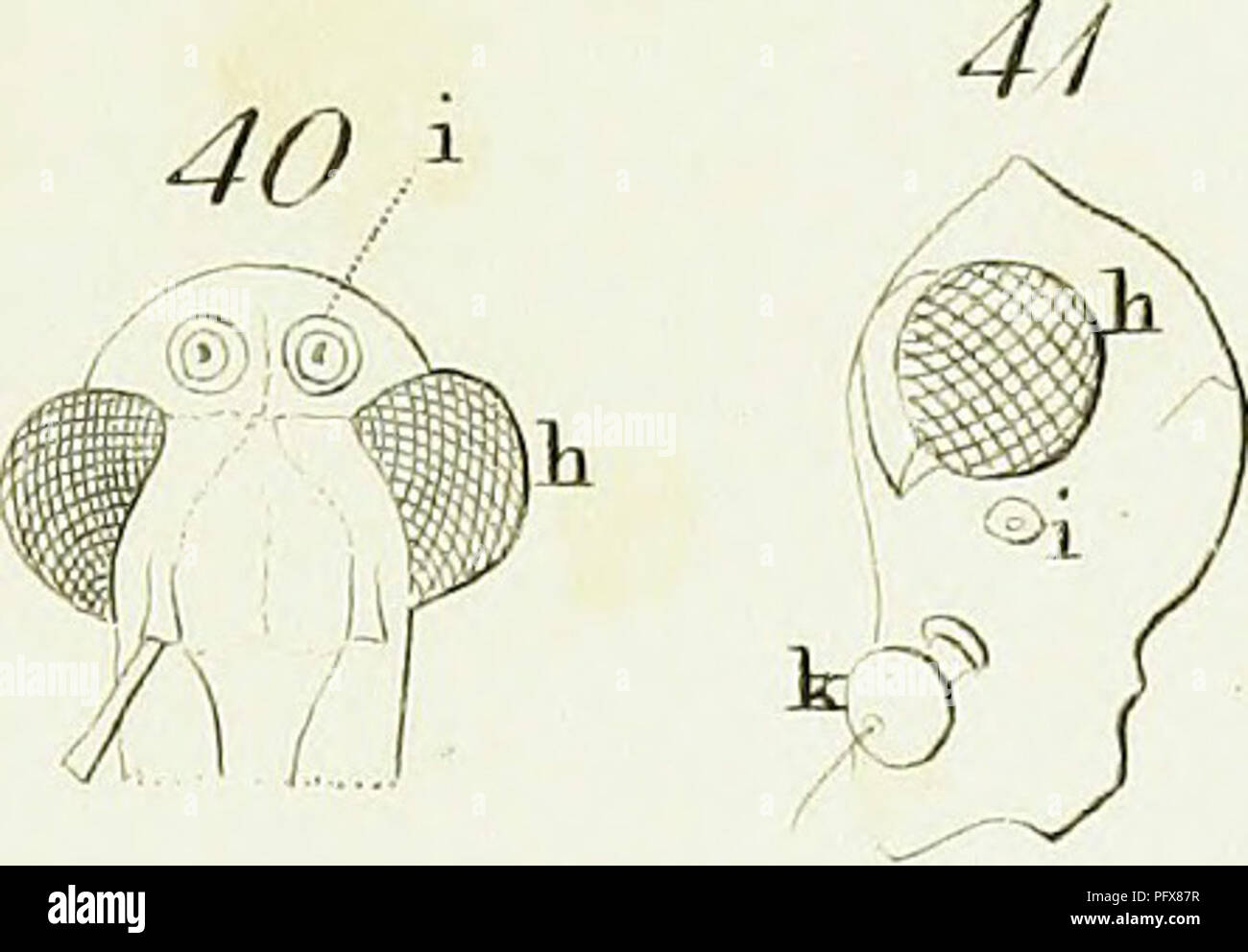 46 Stock Photos Images Page 83 Alamy Kirby G6 Wiring Diagrams An Introduction To Entomology Or Elements Of The Natural History Insects