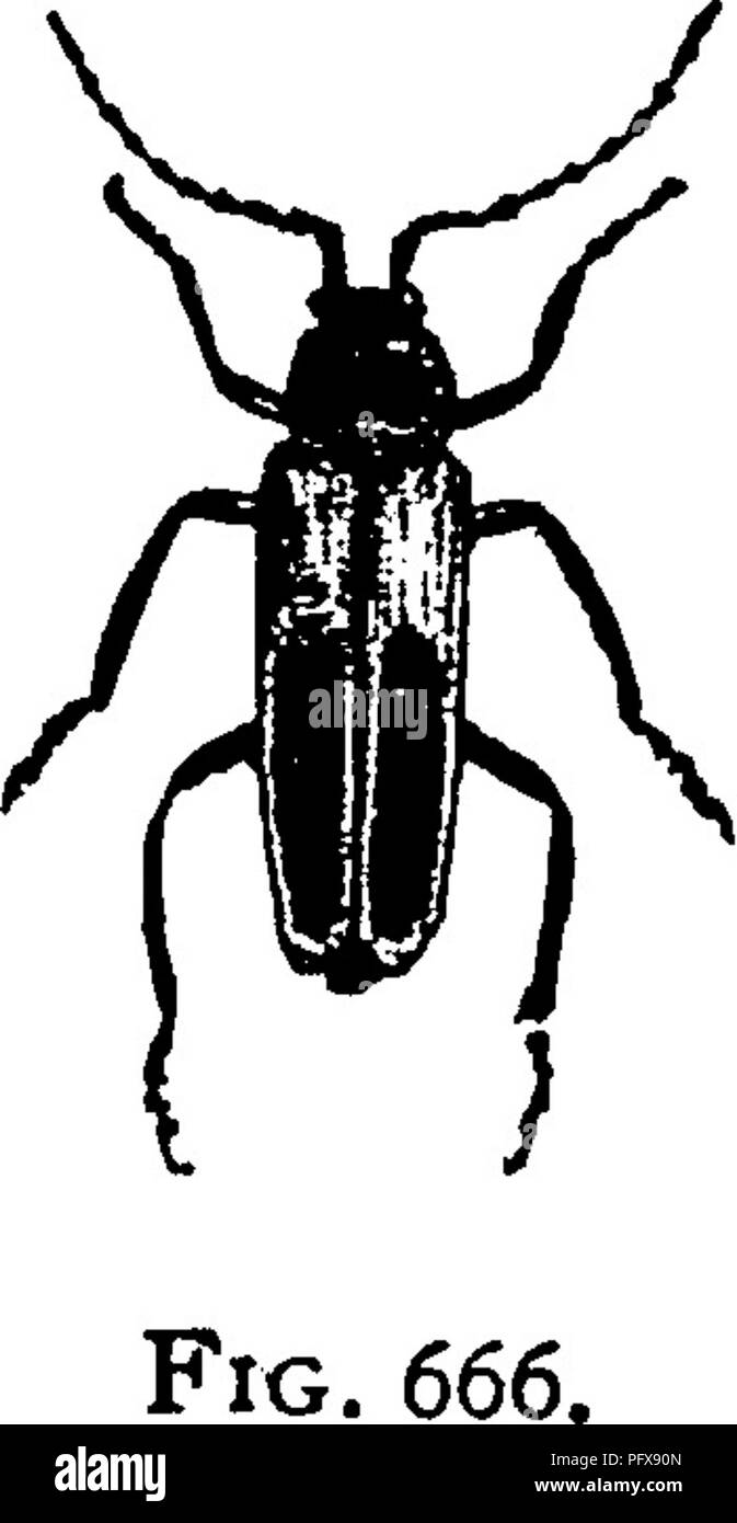 Introduction to Insects and Entomology