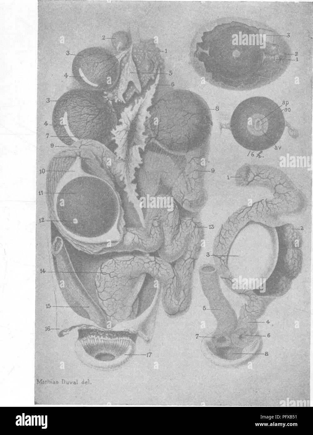 Bacteriology and mycology of foods  Food  V