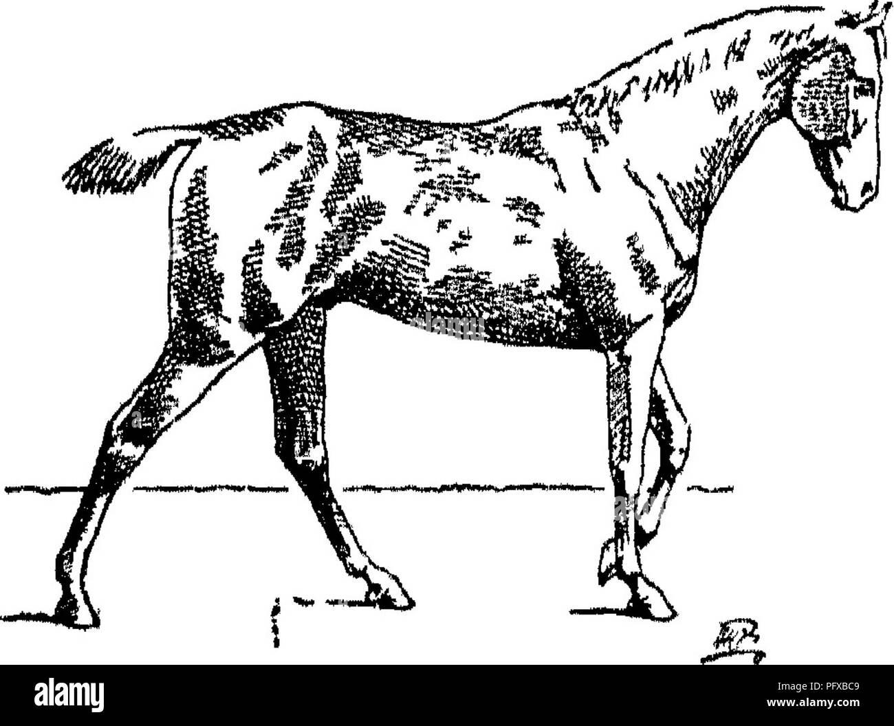 List of pig breeds - Wikipedia