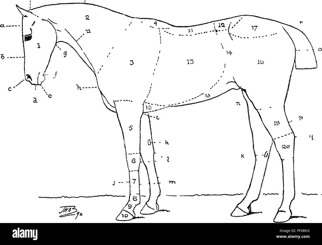 Horses Lip Stock Photos & Horses Lip Stock Images - Alamy