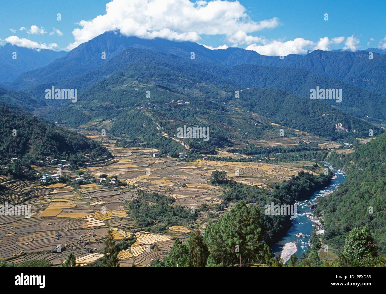View of rice terraces in Mo Chhu Valley in upper Punakha valley, Bhutan - Stock Image