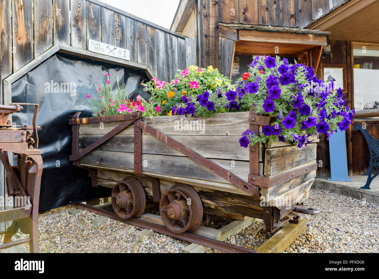 Garden fowers in coal mine rail cart, Big Valley, Alberta, Canada. - Stock Image