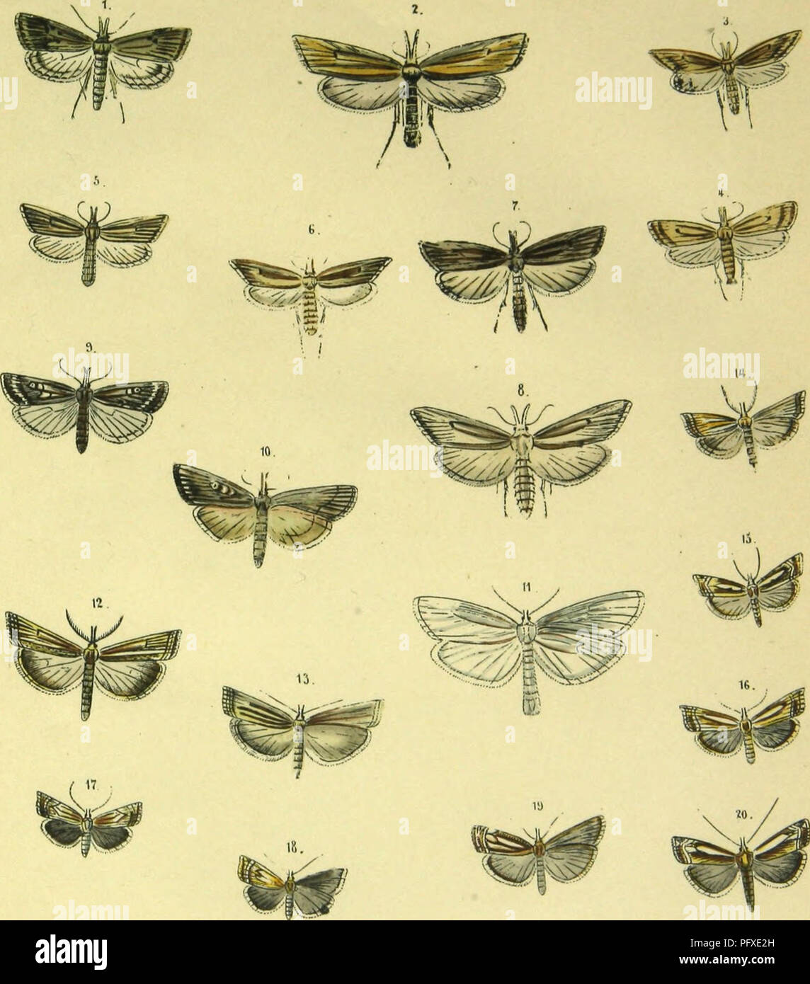 ". Abbildung und Beschreibung europa?ischer Schmetterlinge in systematischer Reihenfolge. Lepidoptera. l.G.CBlL0.1.n.SClRPOPEGAI.ID.(;KAMBl,S 1. l'af: J.. 21 Vhm '%%p^ ""7'. Please note that these images are extracted from scanned page images that may have been digitally enhanced for readability - coloration and appearance of these illustrations may not perfectly resemble the original work.. Praun, Sigmund von. Nu?rnberg, Bauer & Raspe - Stock Image"