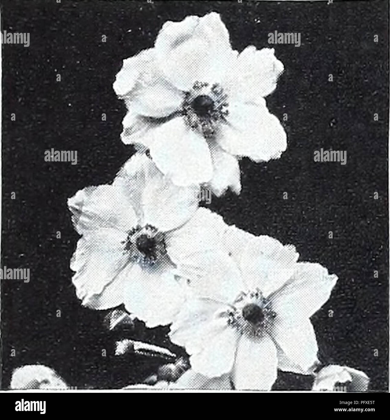 Curries Garden Annual 1939 Flowers Seeds Catalogs Bulbs Plants