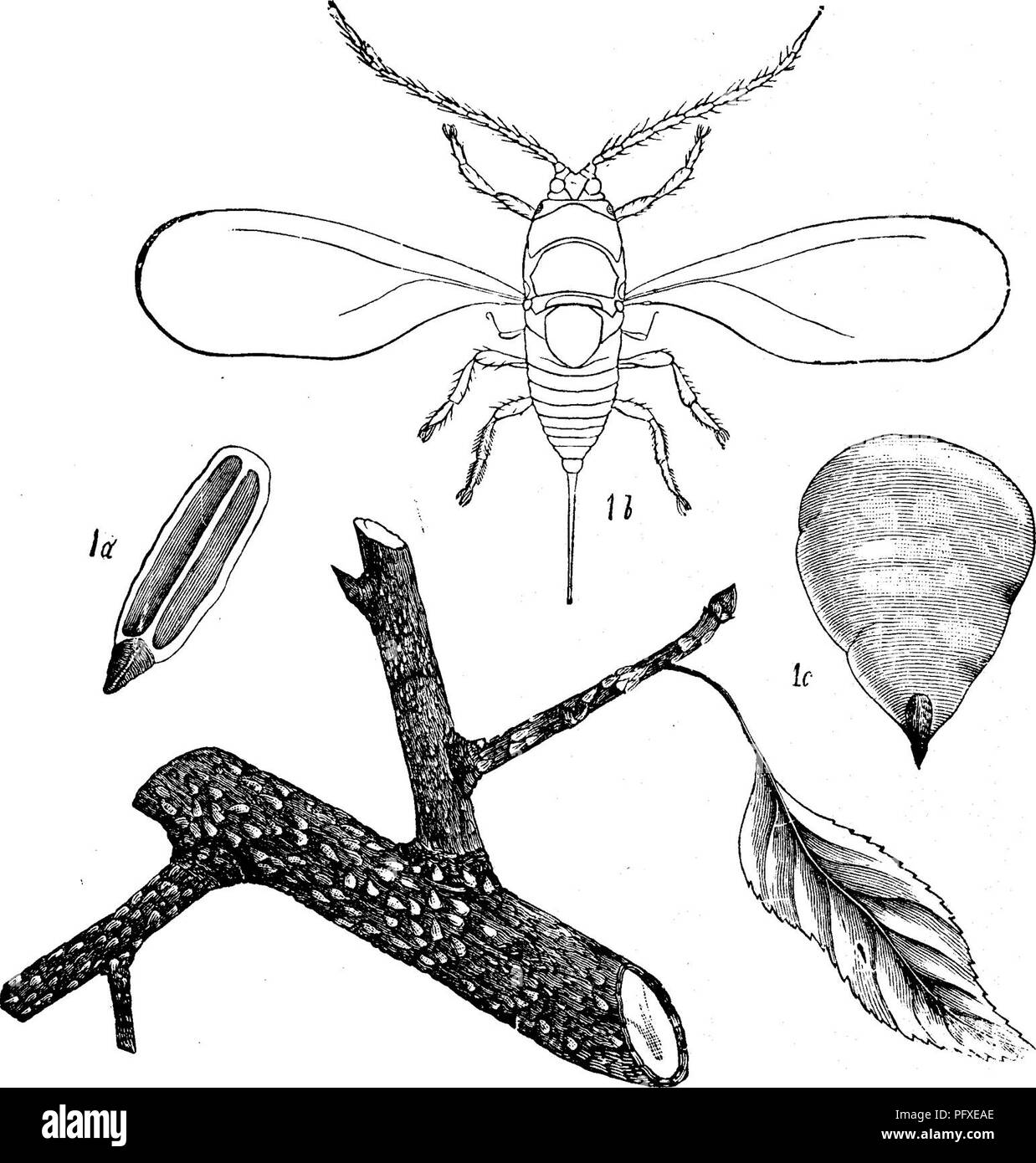 Insects injurious to fruits  Illustrated with four hundred